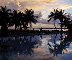 palm trees by beach at sunrise, Bahamas