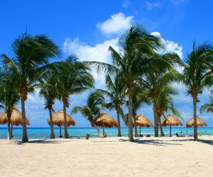 bigstock-palm-trees-mexico-5058478