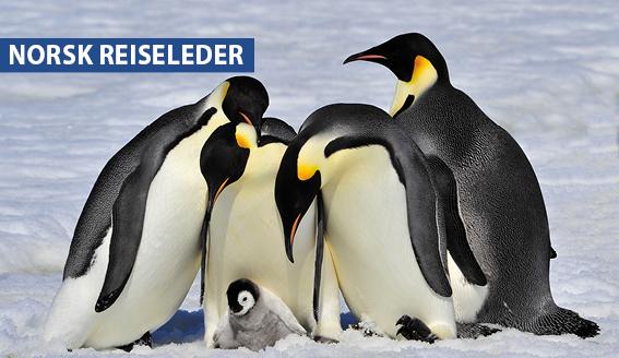 Drømmereise til Antarktis