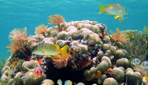 Det karibiske hav med Hurtigruten