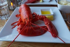 lobstershutterstock_509532040_1200x600